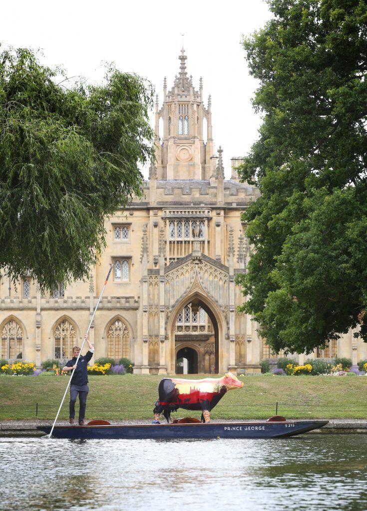 cows about Cambridge, Visit Cambridge, Cambridge Activities, Scavenger Hunt Cambridge, Art Gallery, Charity, Cambridge